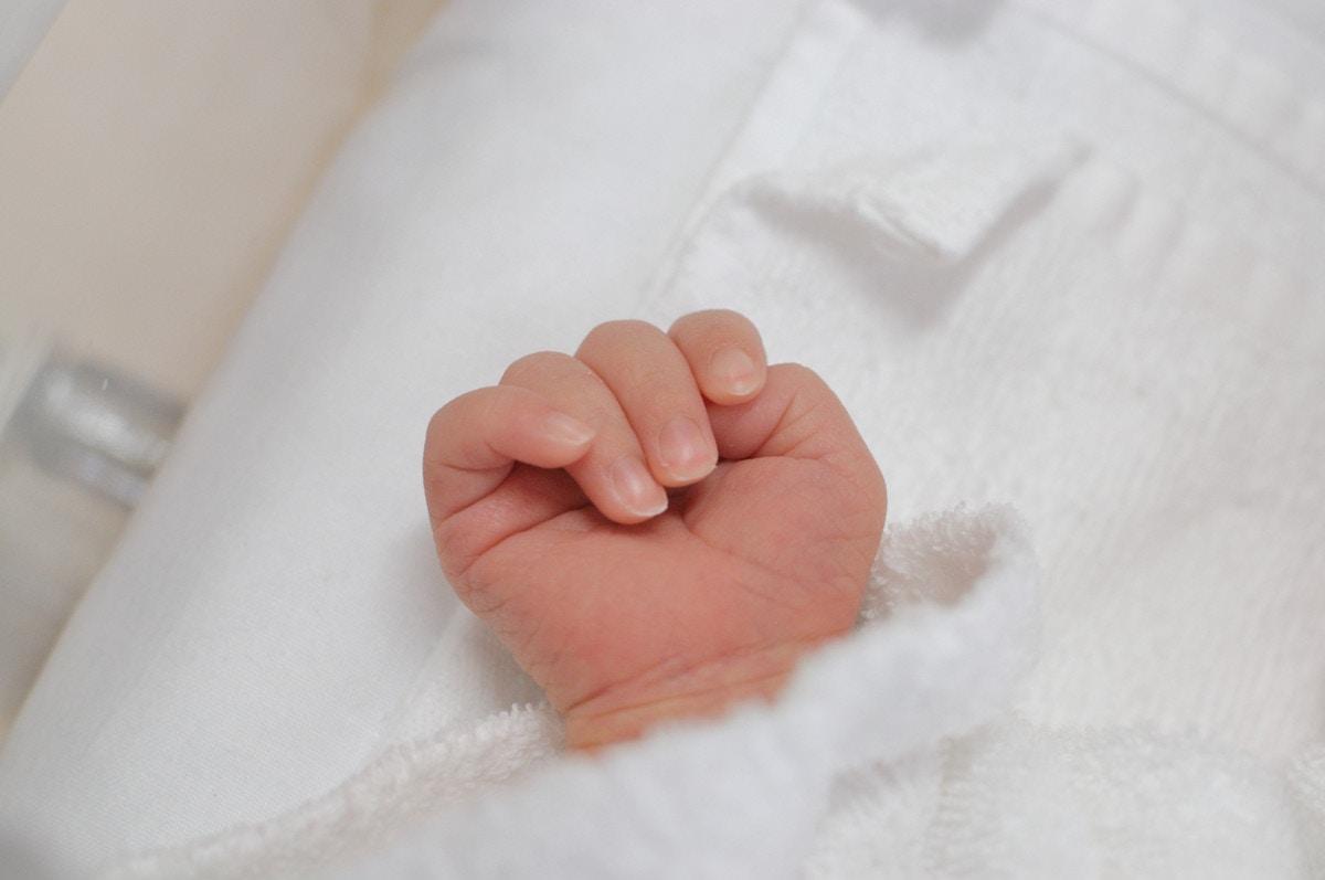 きゅんっとしちゃうクリームパンダちゃんは赤ちゃんのおてて癒しの画像