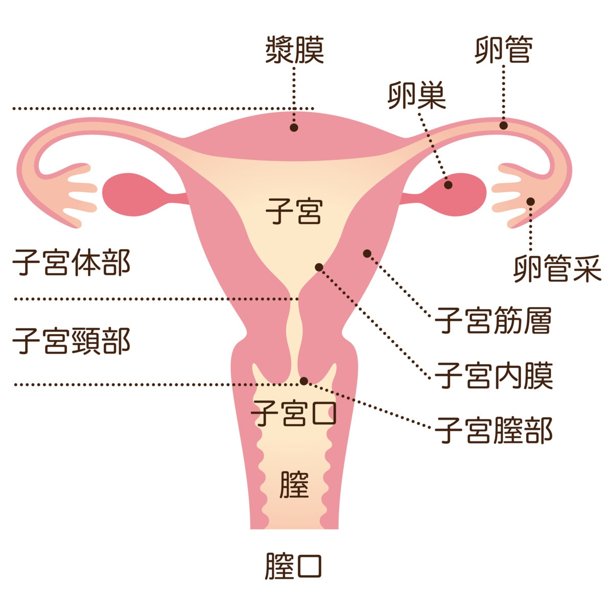 a さん 48 歳 女性 は 卵巣 癌