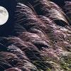 秋は月が美しい季節。月に感謝して今年は一味違ったお月見をしませんか?