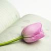 春生まれの赤ちゃんに季節らしい温かい名前をつけよう おすすめの名前・漢字一覧