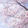 お花見にピッタリな簡単デザートレシピ5選☆