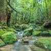 自然がいっぱいの屋久島へ!の~んびり、子連れ旅行のすすめ