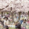 コロナ禍でお花見に行けないママへ!自宅で桜や春の到来を味わえる方法をご紹介