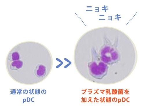 プラズマ乳酸菌を加えた状態のpDC