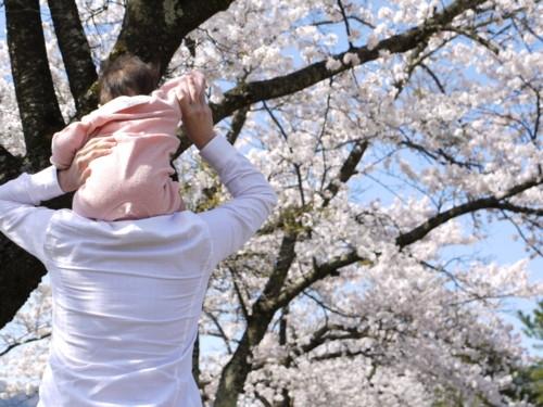 春 桜 親子