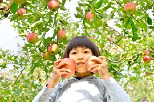 秋 果物狩り