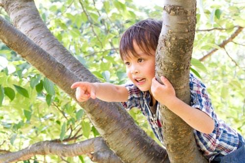 木登り 子供