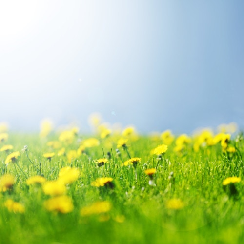 春 黄色 緑