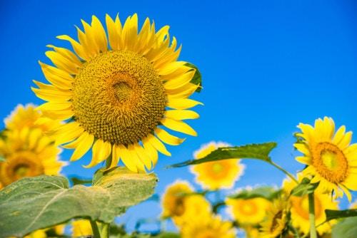 暑い日 花 太陽 青空